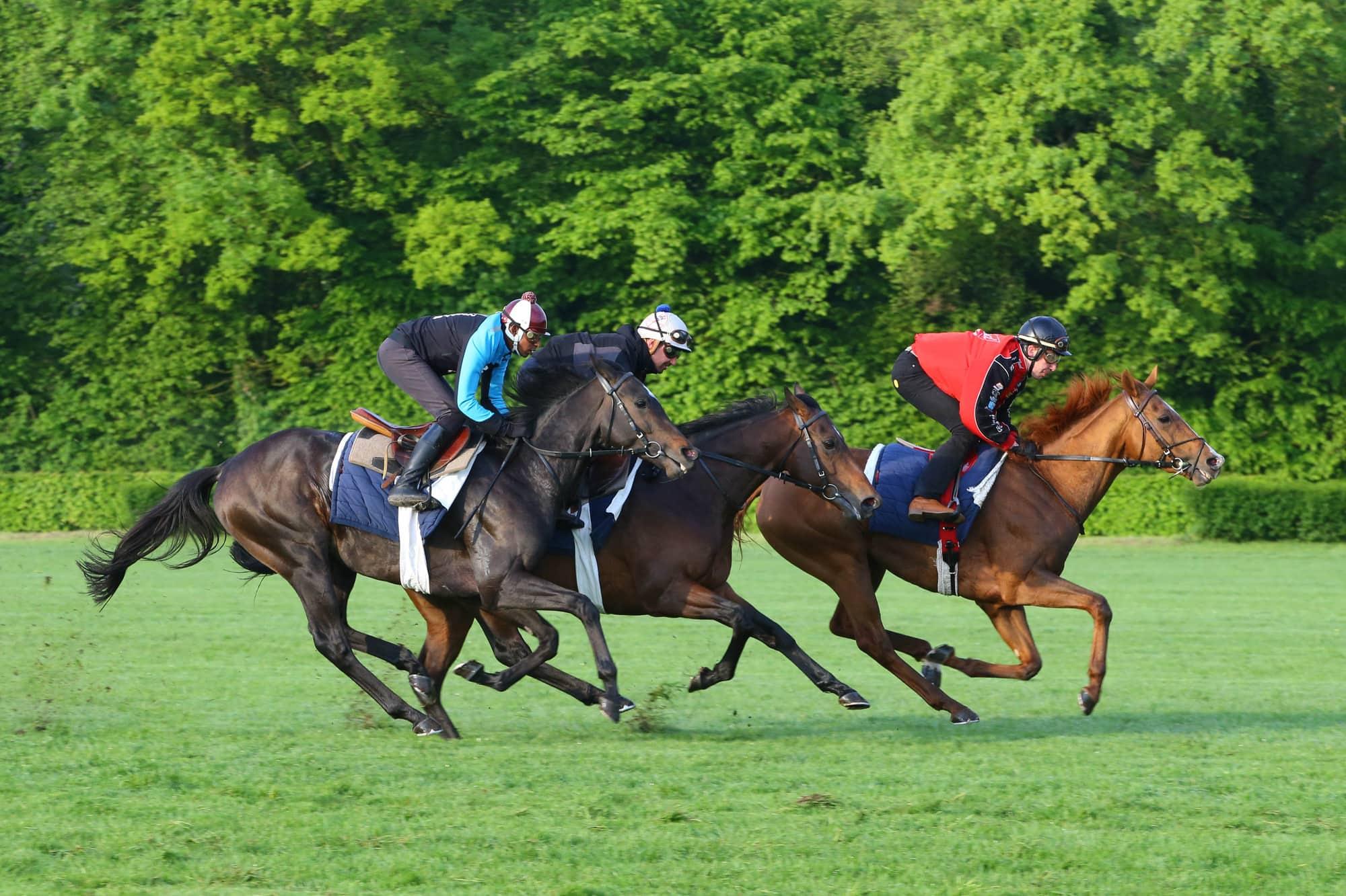 Formation cavalier entrainement