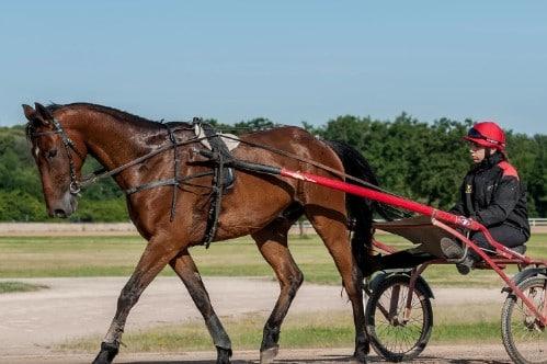 4ème formation cheval
