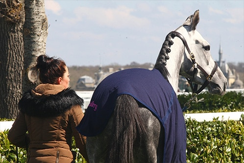 BTS ACSE - Formations cheval AFASEC
